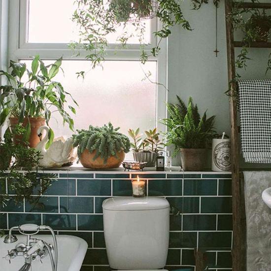 Nên trồng cây gì trong nhà vệ sinh thì tốt nhất